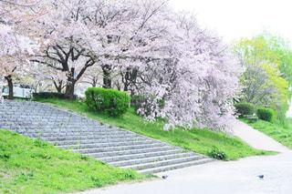 草と木とパスの写真・画像素材[1153971]