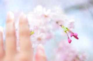 近くの花のアップの写真・画像素材[1154001]