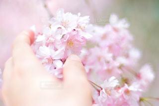近くに花を持っている手のアップの写真・画像素材[1154002]