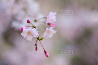 近くの花のアップの写真・画像素材[1154003]