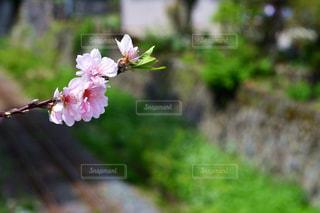 植物にピンクの花 - No.1154008