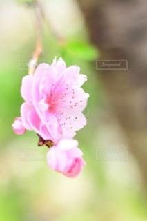 近くの花のアップの写真・画像素材[1154012]