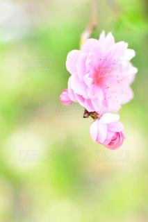 近くの花のアップの写真・画像素材[1154013]
