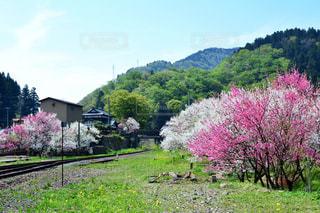 ピンクの花に鉄道は緑豊かな緑のフィールドに立っています。の写真・画像素材[1154028]