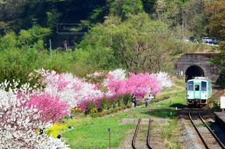 下り列車を走行する列車は森の近く追跡します。の写真・画像素材[1154032]