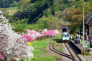 背景の木と、電車の中で電車のトラックします。の写真・画像素材[1154034]