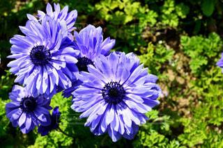 近くの花のアップの写真・画像素材[1154047]