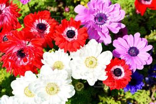 近くの花のアップの写真・画像素材[1154050]
