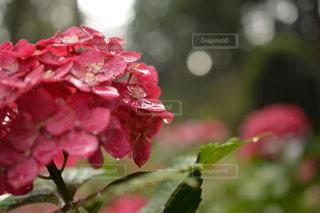 近くの花のアップの写真・画像素材[1154054]