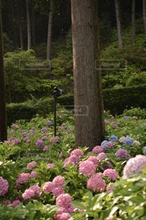 近くのフラワー ガーデンの写真・画像素材[1154057]