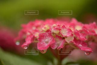 近くの花のアップの写真・画像素材[1154066]