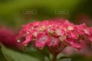近くの花のアップの写真・画像素材[1154067]