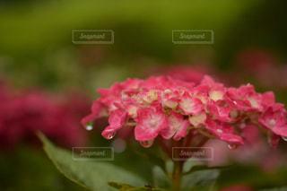 近くの花のアップ - No.1154068