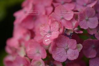 近くの花のアップの写真・画像素材[1154071]
