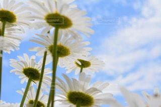 近くの花のアップの写真・画像素材[1154085]