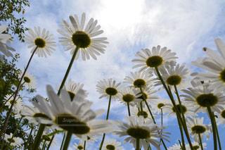 植物の花の花瓶の写真・画像素材[1154088]