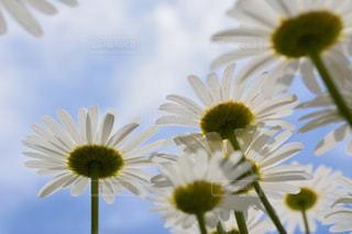 近くの花のアップの写真・画像素材[1154089]