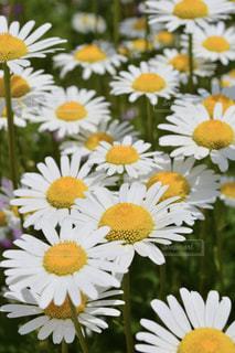 近くに黄色い花のアップの写真・画像素材[1154093]