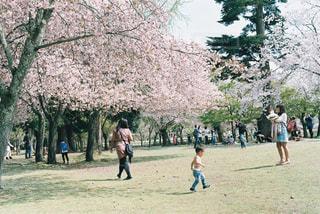 公園でフリスビーを再生する人々 のグループの写真・画像素材[1154103]