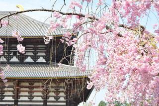 近くの花のアップの写真・画像素材[1154105]
