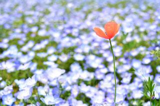 近くの花のアップの写真・画像素材[1156563]