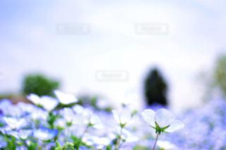 近くの花のアップの写真・画像素材[1156566]