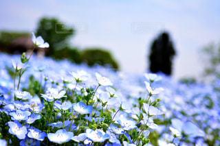 近くの花のアップ - No.1156567
