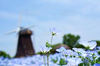近くの花のアップの写真・画像素材[1156571]