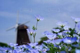 紫色の花一杯の花瓶の写真・画像素材[1156572]