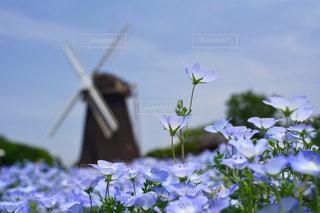 近くの花のアップ - No.1156574