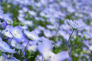 近くの花のアップの写真・画像素材[1156576]