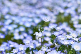 近くの花のアップの写真・画像素材[1156591]