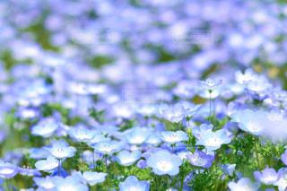 近くの花のアップの写真・画像素材[1156592]