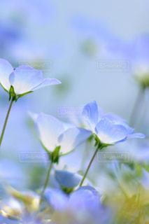 近くの花のアップの写真・画像素材[1156596]