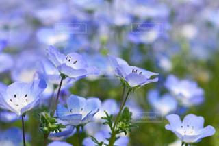 近くの花のアップの写真・画像素材[1156597]