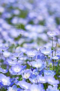近くの花のアップの写真・画像素材[1156598]