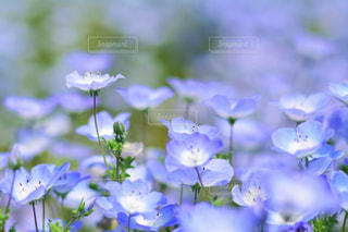近くの花のアップの写真・画像素材[1156599]