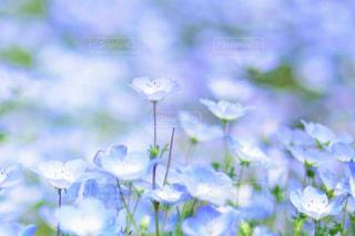 近くの花のアップの写真・画像素材[1156601]