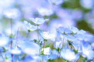 近くの花のアップの写真・画像素材[1156602]