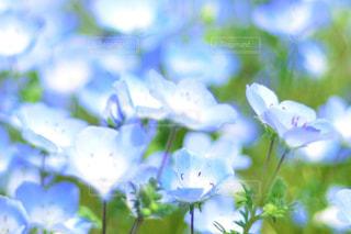 近くの花のアップの写真・画像素材[1156610]