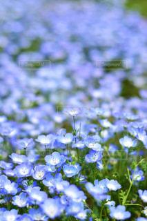 近くの花のアップの写真・画像素材[1156614]