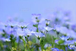 近くの花のアップの写真・画像素材[1156615]