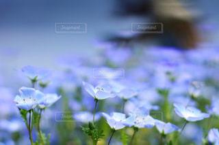 近くの花のアップの写真・画像素材[1156616]