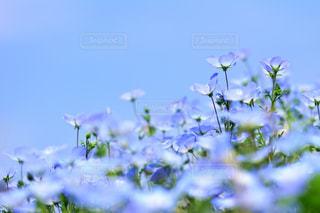 近くの花のアップの写真・画像素材[1156620]