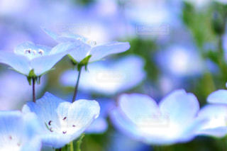 近くに植物の花のアップの写真・画像素材[1156621]