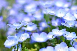 近くの花のアップの写真・画像素材[1156622]