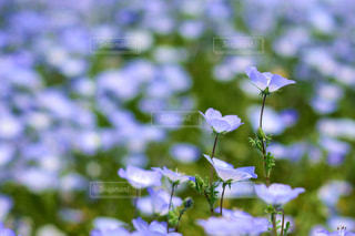 近くの花のアップの写真・画像素材[1156625]