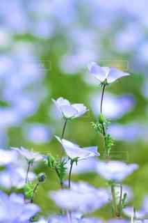 近くの花のアップの写真・画像素材[1156626]