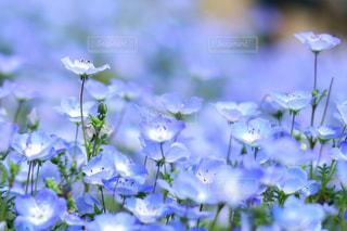 近くの花のアップの写真・画像素材[1156627]