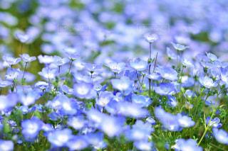 近くの花のアップの写真・画像素材[1156628]